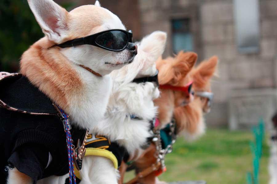 perros a la moda