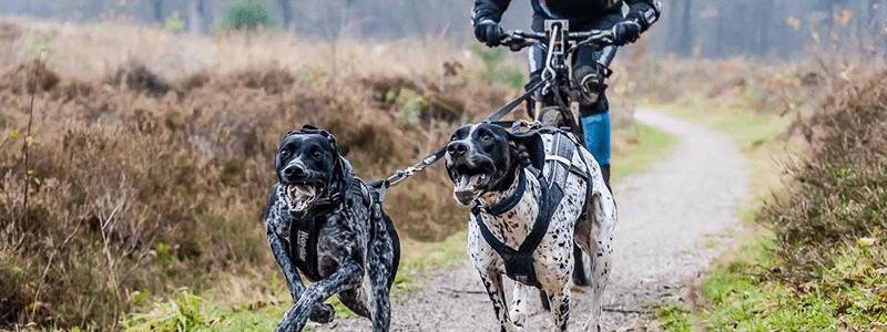 Los mejores perros para practicar bikejoring