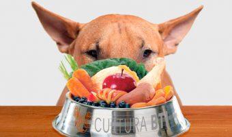 La dieta BARF para tu mascota sabes en que consiste
