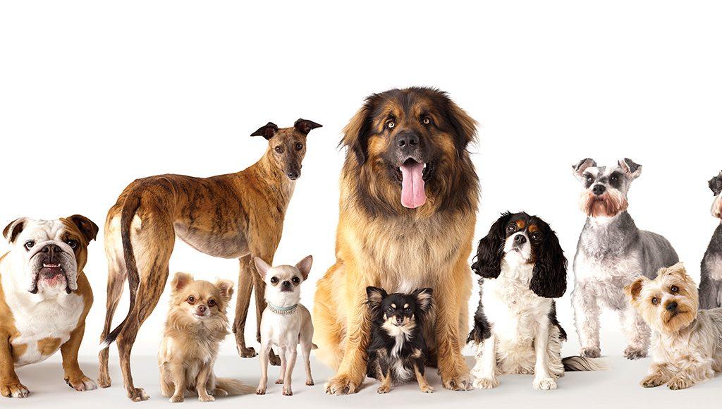 salud de los perros