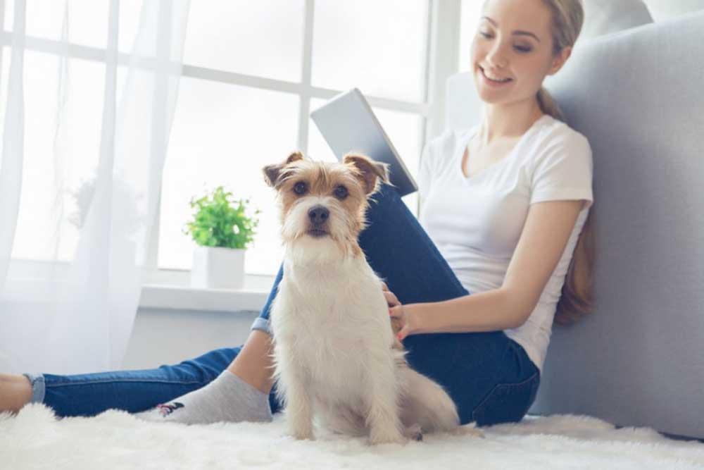 Las ventajas de tener un perro en casa