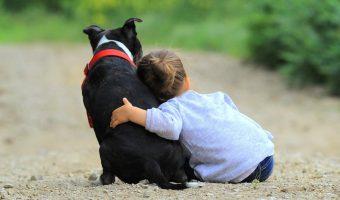Los mejores animales para los niños autistas
