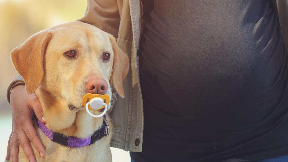 embaraza y tienes un perro