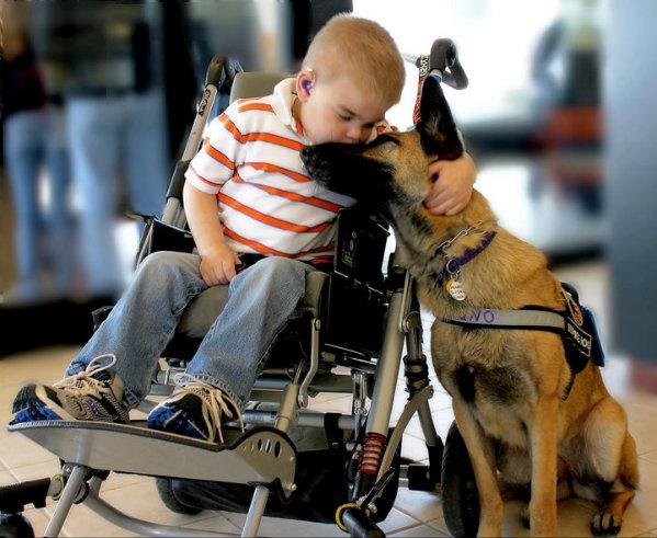 perros y niños enfermos