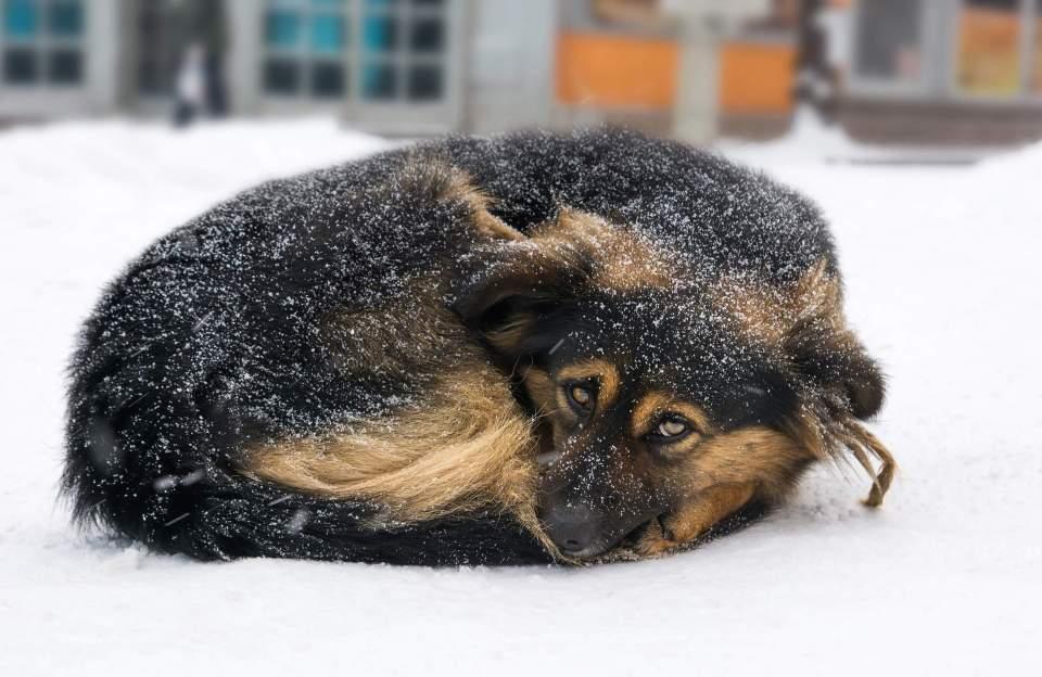 Prevención y tratamiento de la hipotermia en los perros