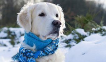 Cómo prevenir la hipotermia en los perros