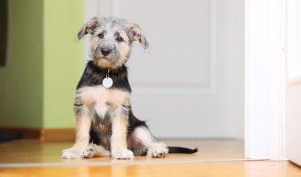 Cómo preparar tu casa para tu primer cachorro