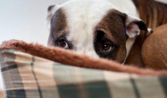 ¿Cómo tratar la ansiedad en perros?