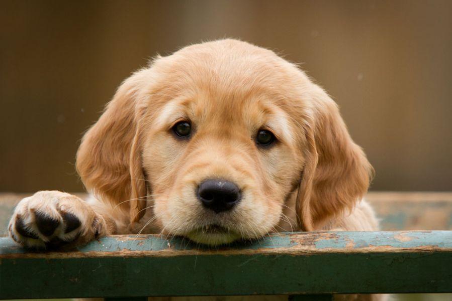hechos curiosos sobre perros que quizás no sabías