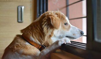 ¿Cuánto tiempo debes dejar un perro solo en casa?