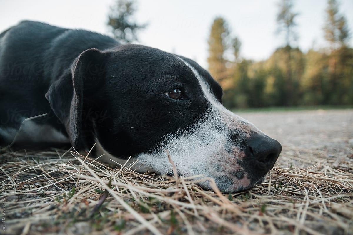 Perros con anemia: alimentación, cuidados, tratamientos