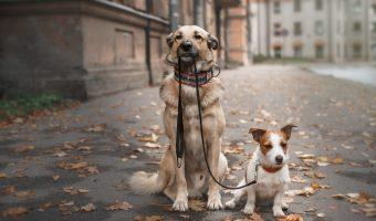 ¿Cuáles son las mejores razas de perros para vivir en ciudad?