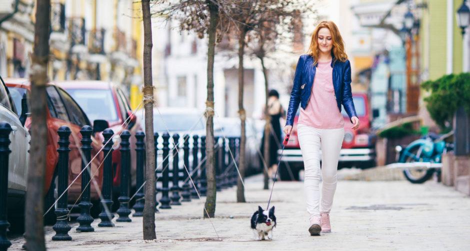 ¿Qué perros son mejor para vivir en ciudad?