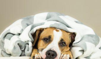 ¿Qué hacer si tu perro vomita?