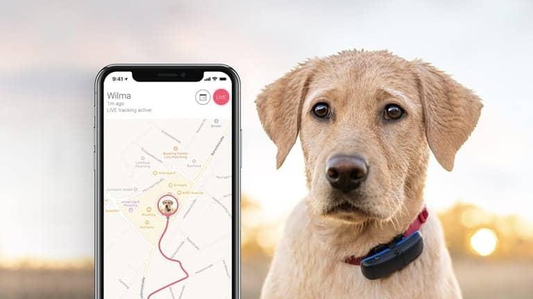 Guía sobre localizadores de mascotas