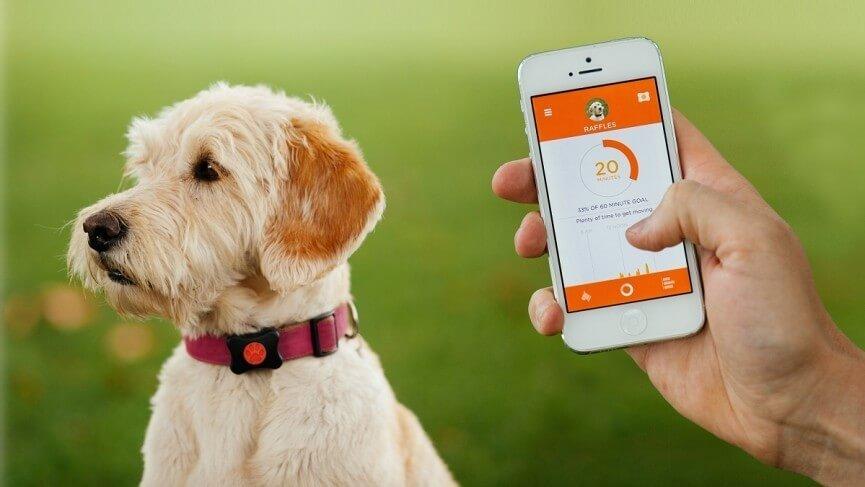 La mejor guía sobre localizadores de mascotas.