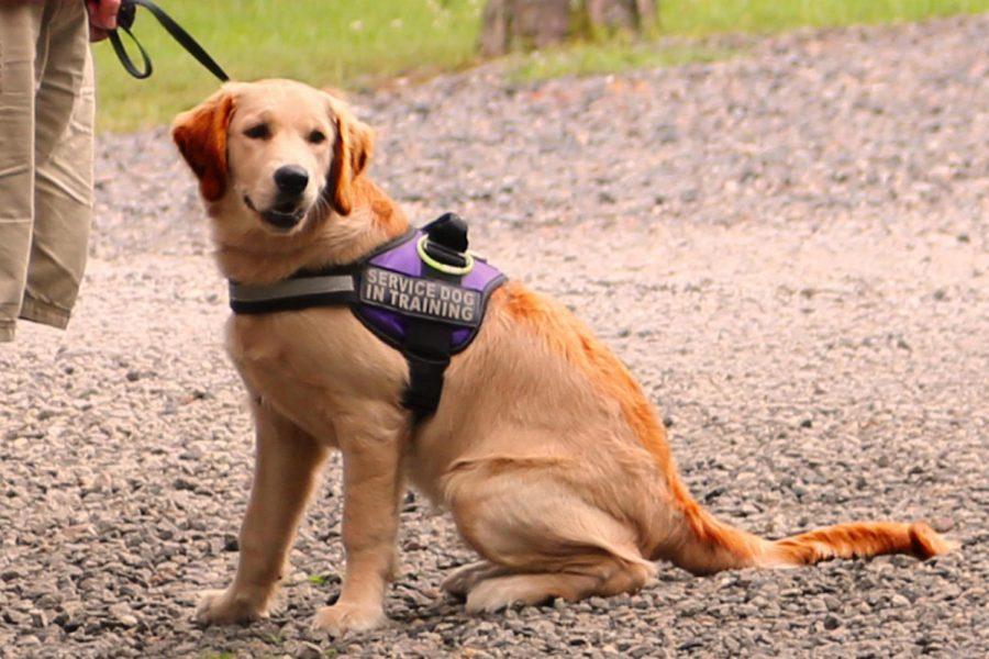 mejores perros para personas con discapacidad