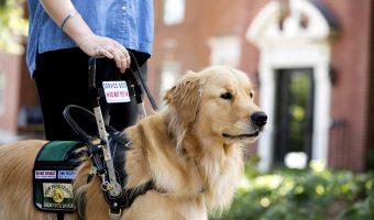 Las mejores razas de perros para personas con discapacidad