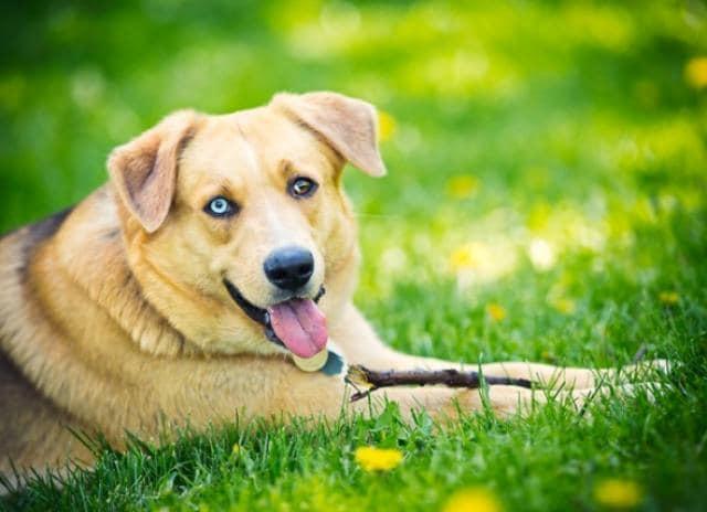 ¿Qué es una alergia ambiental en los perros?