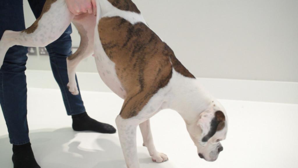 ¿Cómo evitar que tu perro se asfixie?