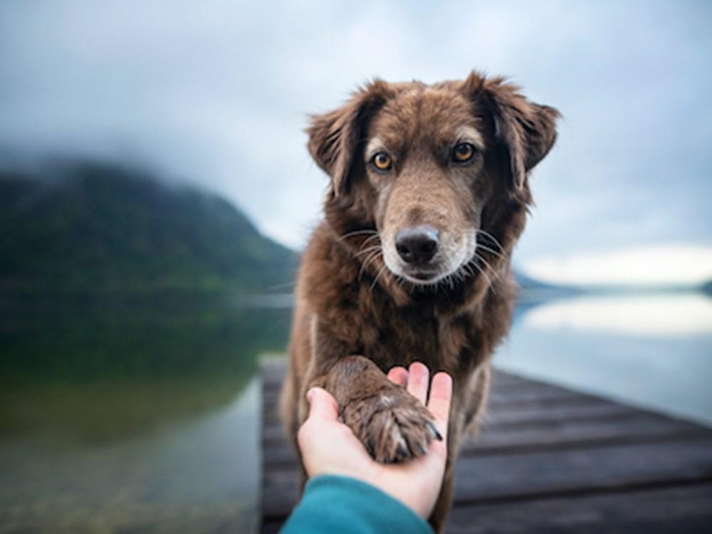 Enfermedad renal en los perros
