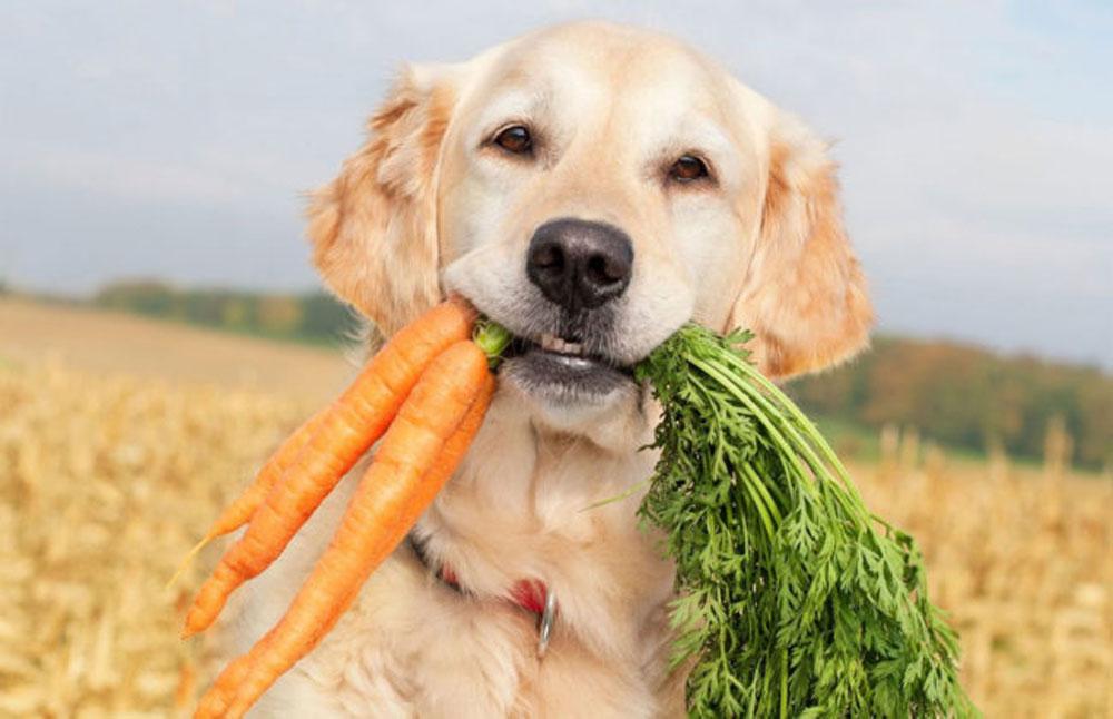Perros veganos